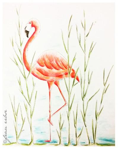 Flamingo_allein